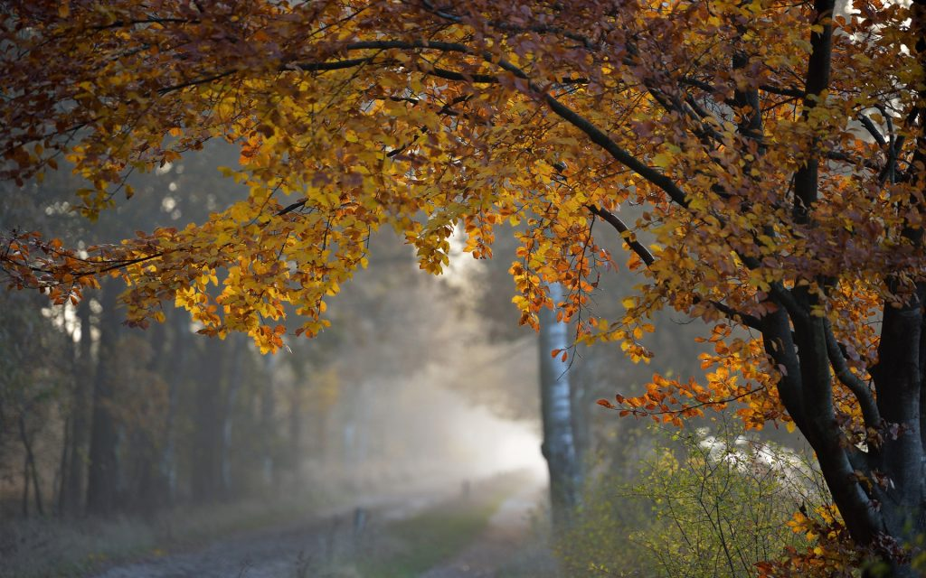 Beautiful-Rainy-Autumn-Wallpaper-Wide-PIC-MCH045092-1024x640 Autumn Rain Desktop Wallpaper 25+