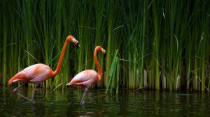 Flamingo Wallpaper Hd 43+