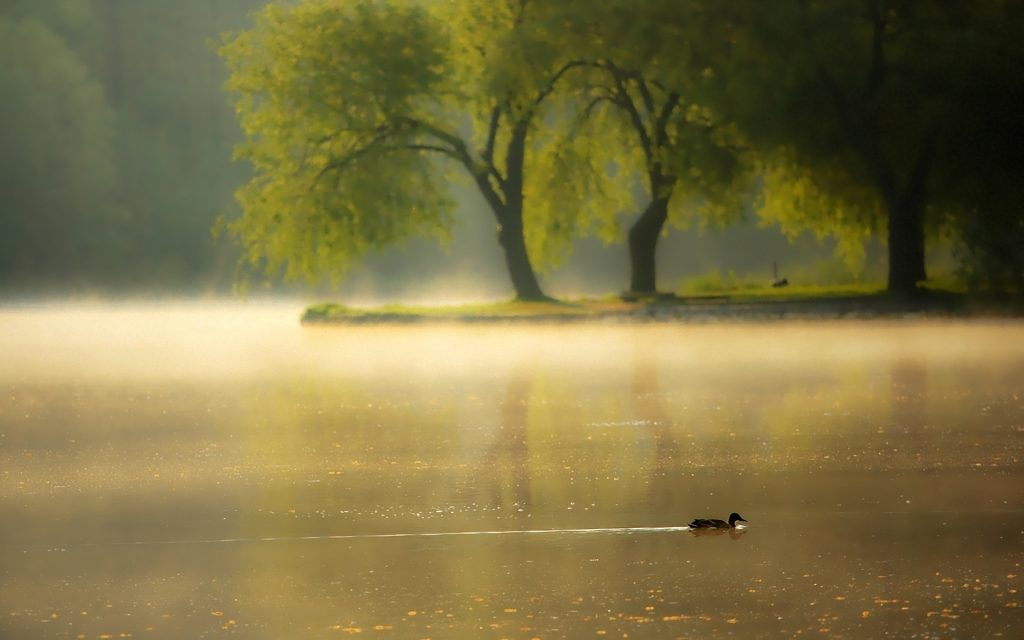 Fog-Backgrounds-Free-Download-PIC-MCH064494-1024x640 Fog Wallpaper Free 43+