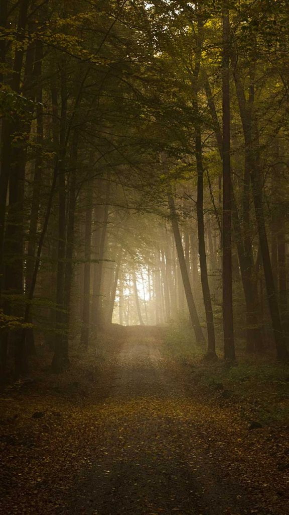 Forest-iPhone-Wallpaper-PIC-MCH064740-576x1024 Fog Wallpaper Iphone 6 45+
