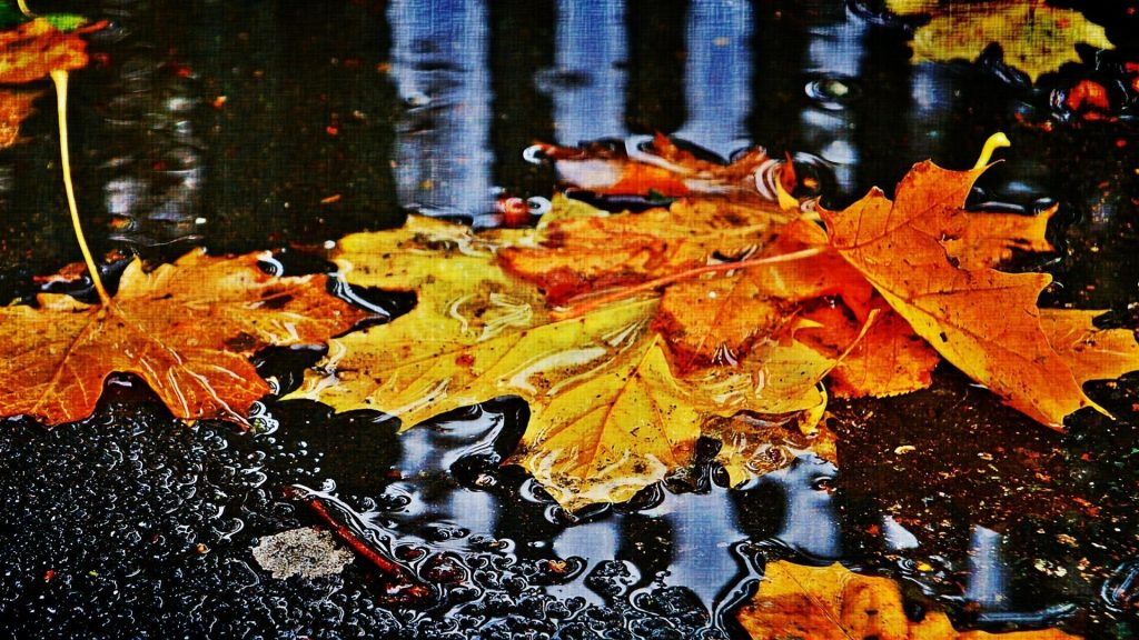 PIC-MCH013313-1024x576 Autumn Rain Desktop Wallpaper 25+