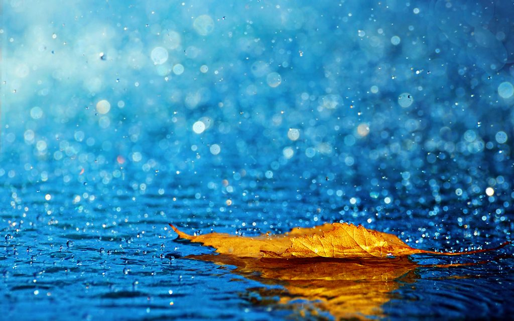 Rain-Ariyaamo-PIC-MCH097238-1024x640 Animated Rain Desktop Wallpaper 42+