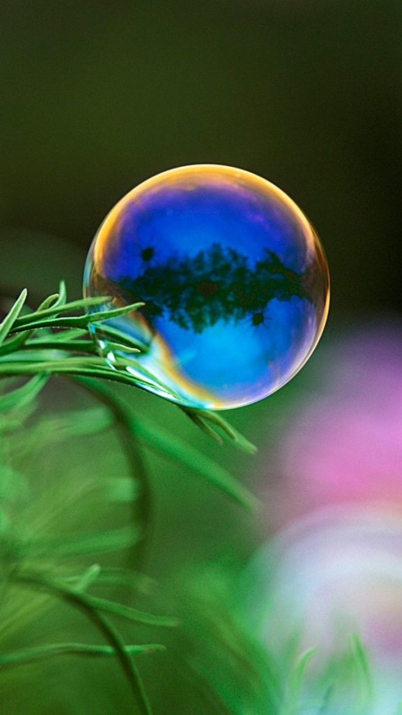 Soap-Bubble-and-Green-Leaf-PIC-MCH0102812-577x1024 Bubbles Wallpaper Iphone 29+