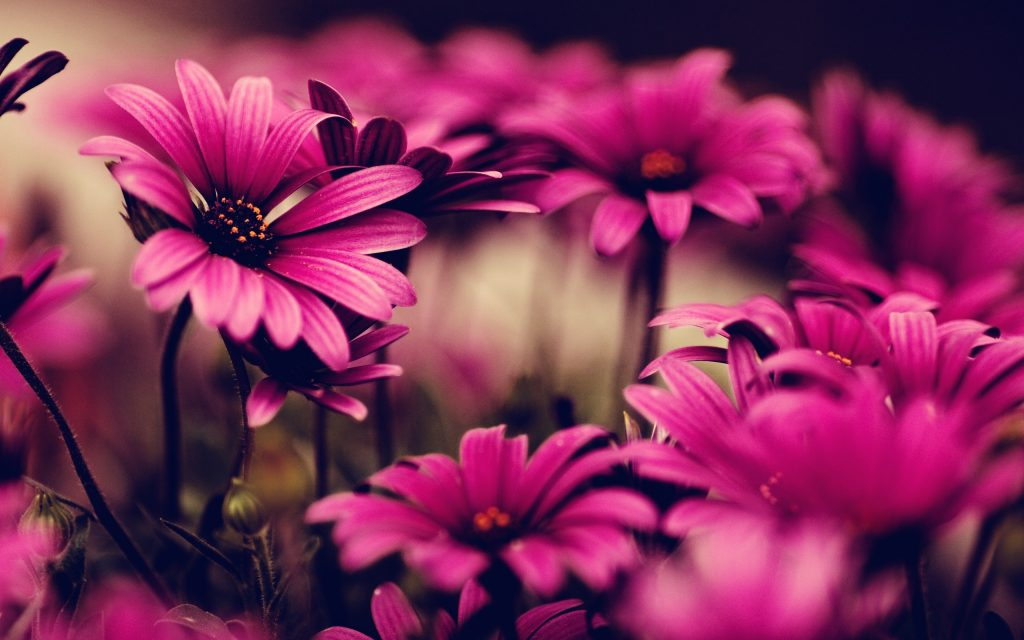 Widescreen-Of-Pink-Flower-Hd-Backgrounds-Your-Picture-Wallpaper-Images-Computer-PIC-MCH0116478-1024x640 Pink Hd Wallpapers For Pc 45+
