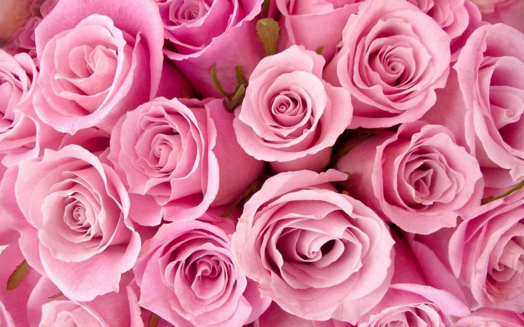 amazing-roses-wallpaper-for-desktop-x-for-android-tablet-PIC-MCH025572-1024x640 Pink Hd Wallpapers For Desktop 41+