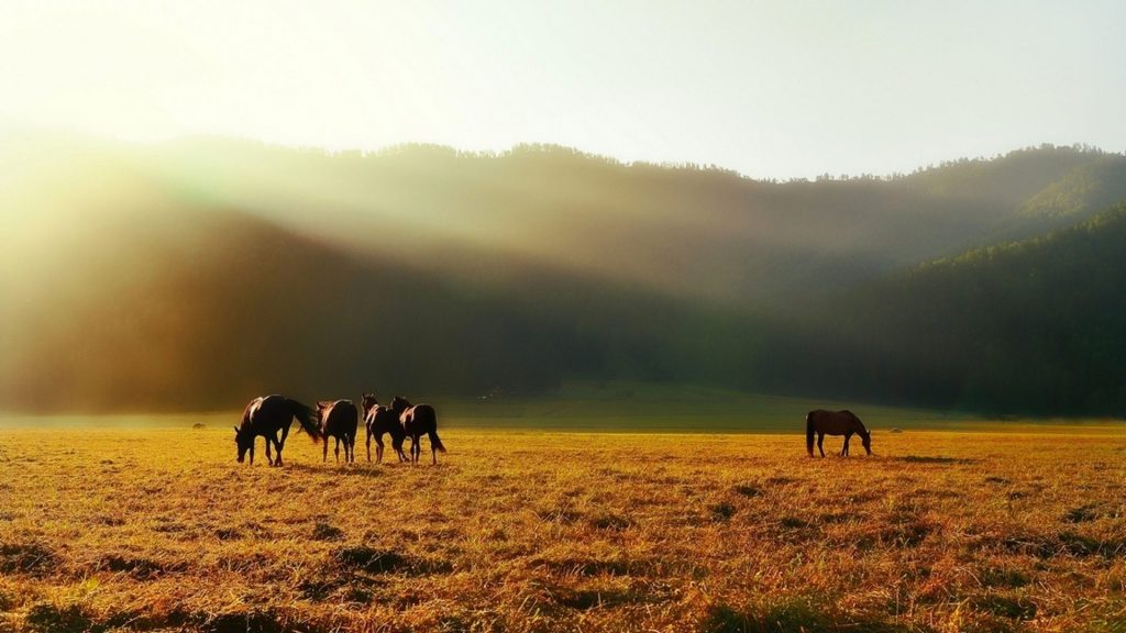 animals-horses-mist-fields-landscapes-fog-mountains-animal-wallpaper-desktop-free-download-x-PIC-MCH040476-1024x576 Fog Wallpaper Desktop 34+