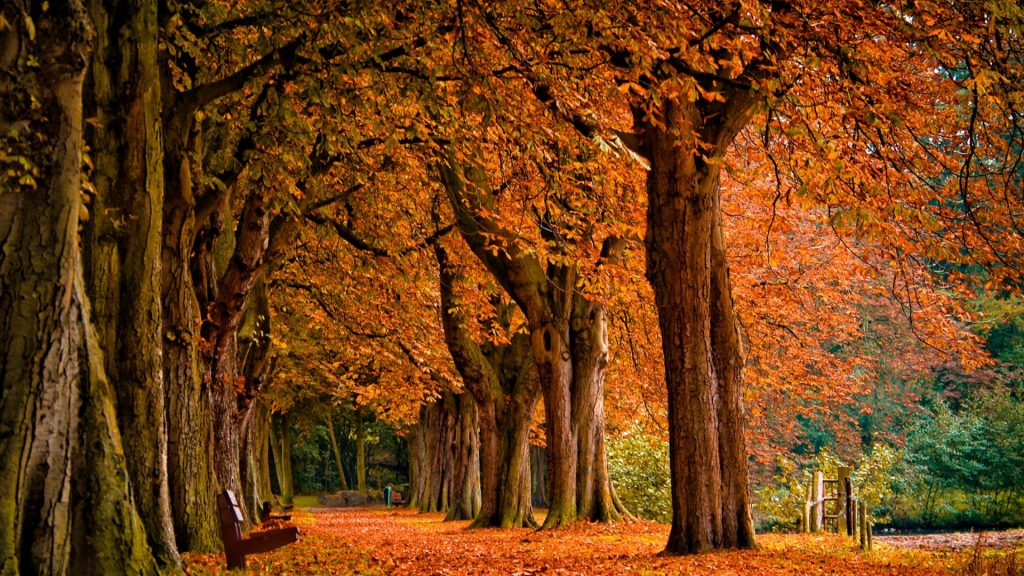 autumn-background-PIC-MCH042303-1024x576 Autumn Rain Desktop Wallpaper 25+