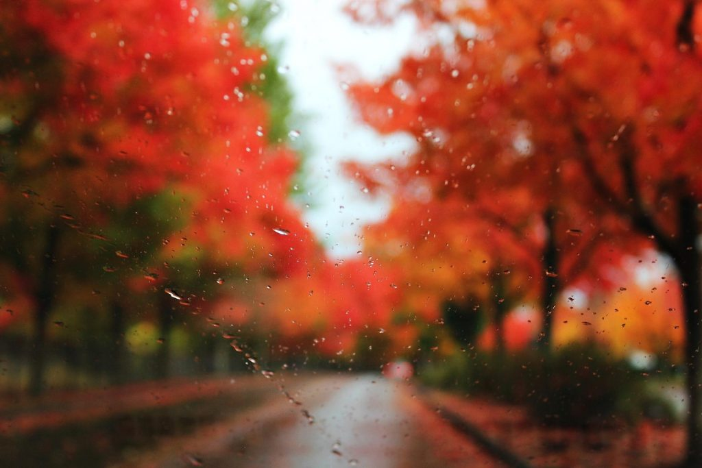 autumn-rain-PIC-MCH042327-1024x683 Autumn Rain Desktop Wallpaper 25+