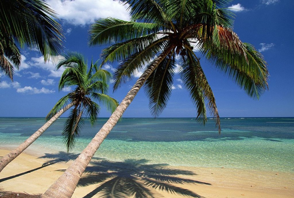 beach-palm-trees-tree-dominican-republic-coconut-tropical-wallpaper-desktop-background-x-PIC-MCH044471-1024x691 Dominican Wallpaper Hd 37+