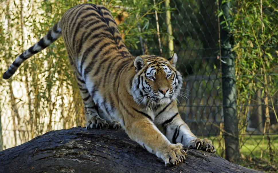 big-cat-K-wallpaper-middle-size-PIC-MCH046459 Big Cat Wallpapers Hd 23+