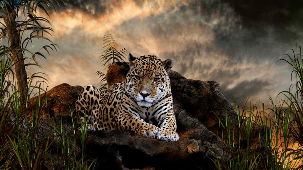 cool-wild-animal-wallpaper-hd-For-Desktop-Wallpaper-PIC-MCH054392-1024x576 Big Cat Wallpapers Free 33+