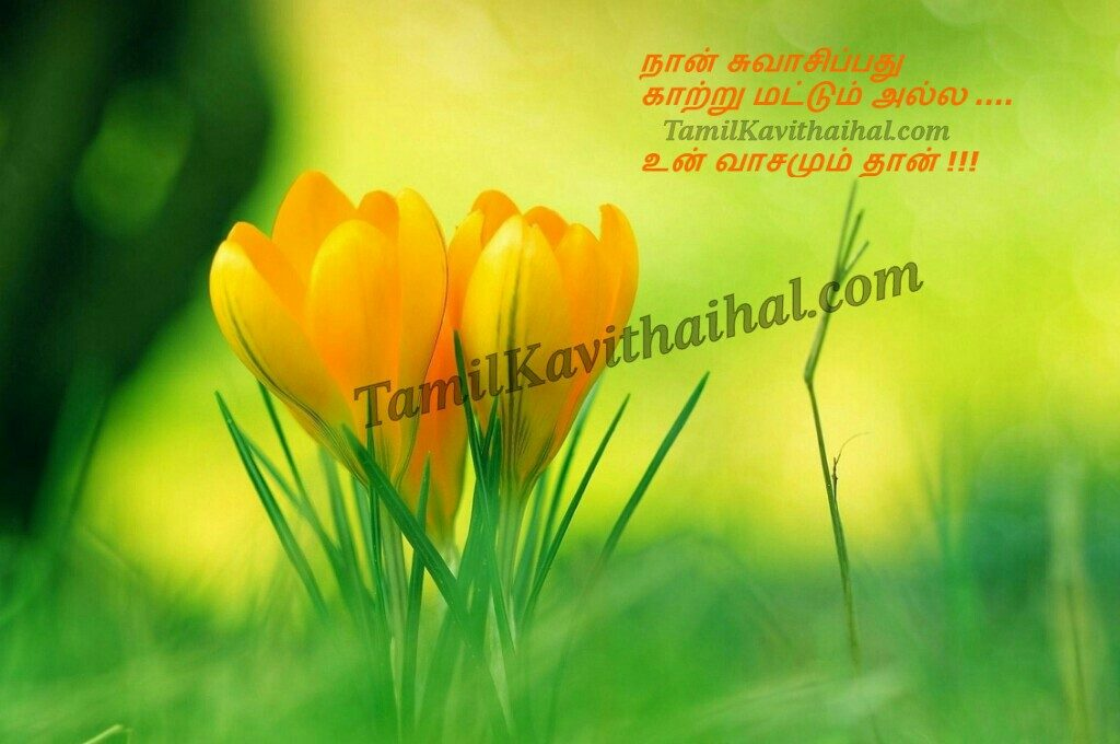 cute-tamil-quotes-love-flower-kavithai-wallpaper-feel-PIC-MCH055681-1024x680 Tamil Wallpaper Image 25+