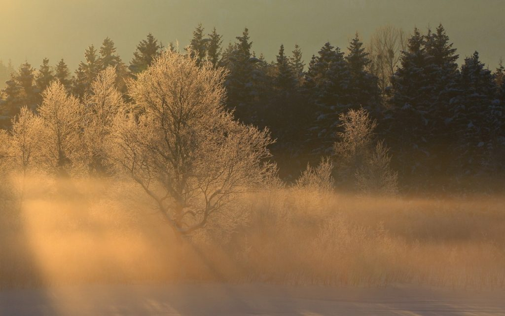 desktop-images-landscapes-snow-fog-trees-forest-lovely-place-sunrise-tablet-winter-organicnature-wo-PIC-MCH058191-1024x640 Fog Wallpaper Desktop 34+