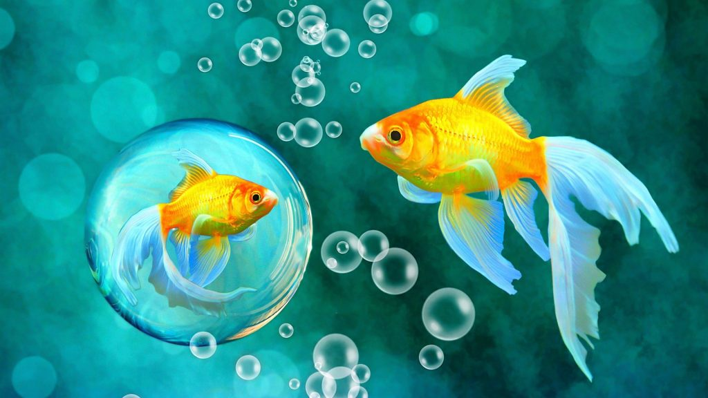 fishes-underwater-bokeh-fish-blue-goldfish-bubbles-water-sea-gold-escolar-pictures-x-PIC-MCH064007-1024x576 Bubbles Wallpaper Live 10+