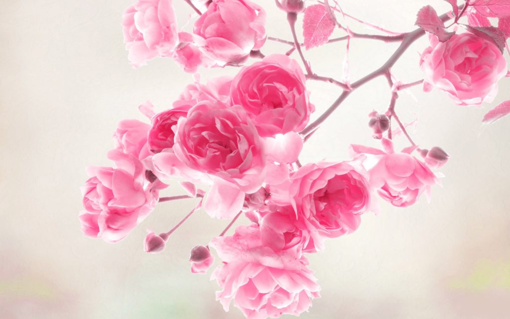 flower-wallpaper-PIC-MCH09398-1024x640 Pink Hd Wallpapers Widescreen 32+