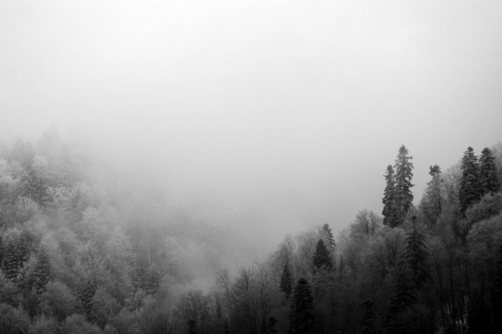Foggy Forest PIC MCH064527
