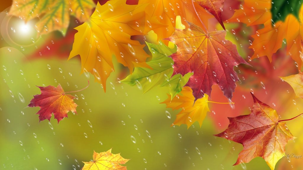 forces-of-nature-maple-wind-fall-showers-gold-rain-orange-autumn-dance-bright-pictures-green-PIC-MCH064650-1024x576 Autumn Rain Desktop Wallpaper 25+