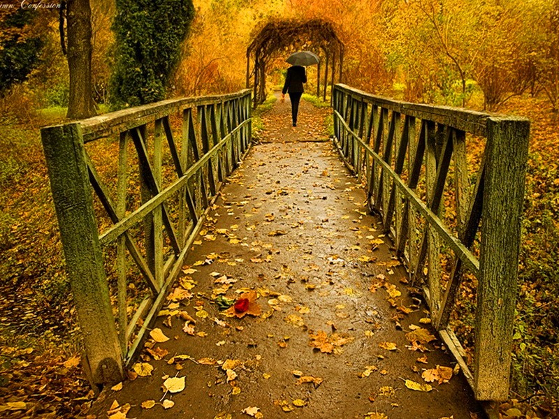 forests-fall-rain-bridge-nature-day-umbrella-leaves-rainy-man-forest-autumn-wallpaper-for-computer-PIC-MCH064762 Autumn Rain Desktop Wallpaper 25+