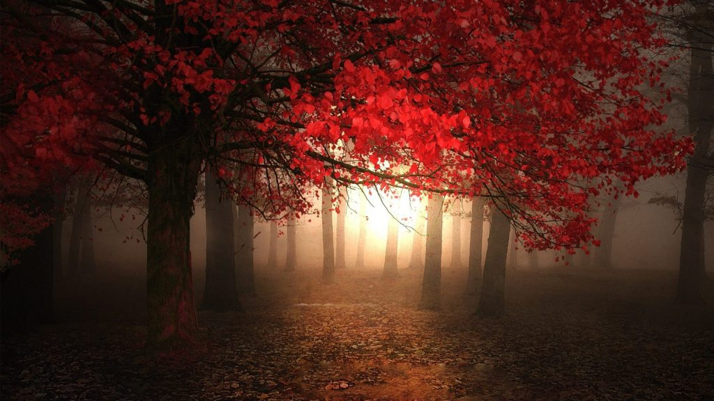 forests-light-foggy-leaves-fall-season-morning-autumn-forest-magic-trees-red-beautiful-new-hd-wallp-PIC-MCH064769-1024x576 Fog Wallpaper Desktop 34+