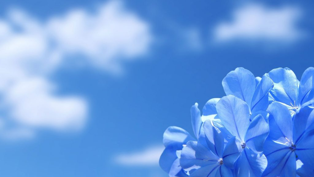 Sky Blue Color Hd Wallpapers 18 Page 2 Of 3 Dzbc Org