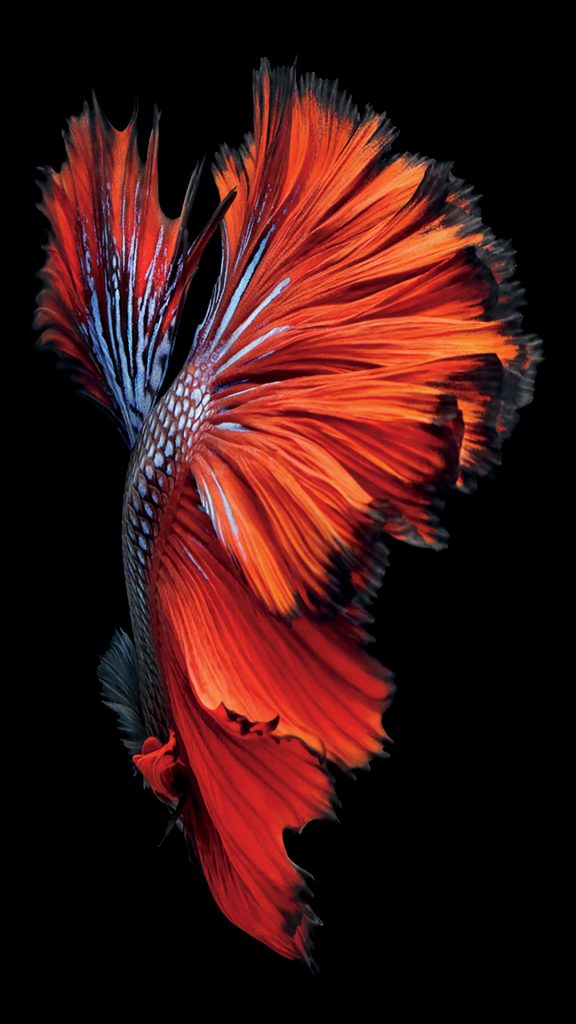 iPhone-s-Fish-Red-Wallpaper-PIC-MCH076749-576x1024 Apple Iphone 6 Plus Dynamic Wallpapers 36+