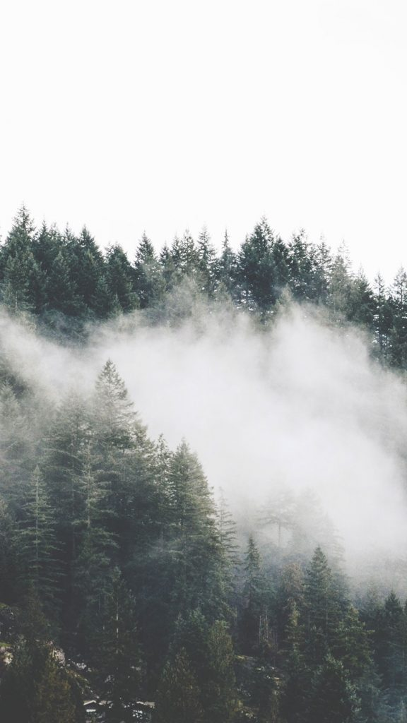 mountain-mist-PIC-MCH087670-576x1024 Fog Wallpaper Iphone 6 45+