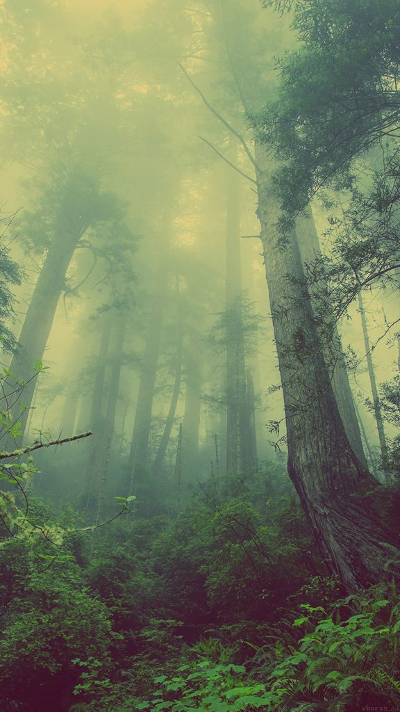 papers.co-mn-forest-wood-fog-nature-green-iphone-wallpaper-PIC-MCH093528-576x1024 Fog Wallpaper Iphone 48+