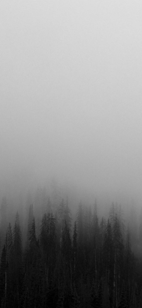 papers.co-no-fog-minimal-mountain-wood-nature-iphone-wallpaper-PIC-MCH093670-473x1024 Fog Wallpaper Iphone 48+