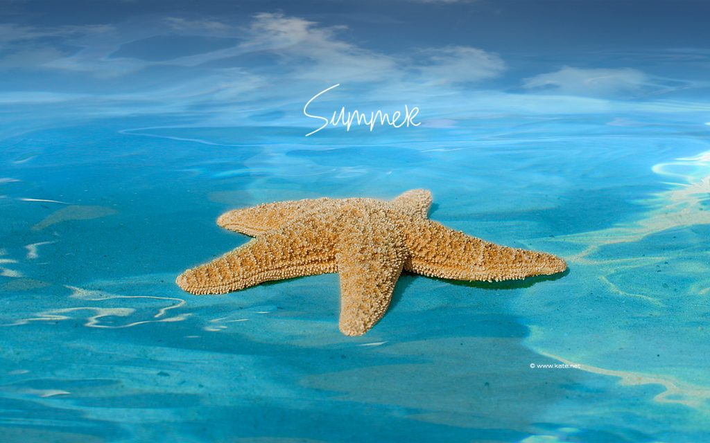 summer-screensavers-PIC-MCH0104743-1024x640 Seasonal Wallpaper Free For Desktop 37+