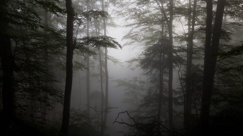 trees-fog-forest-silhouettes-driftwood-nature-wallpaper-abstract-x-PIC-MCH0108124-1024x576 Fog Wallpaper Desktop 34+