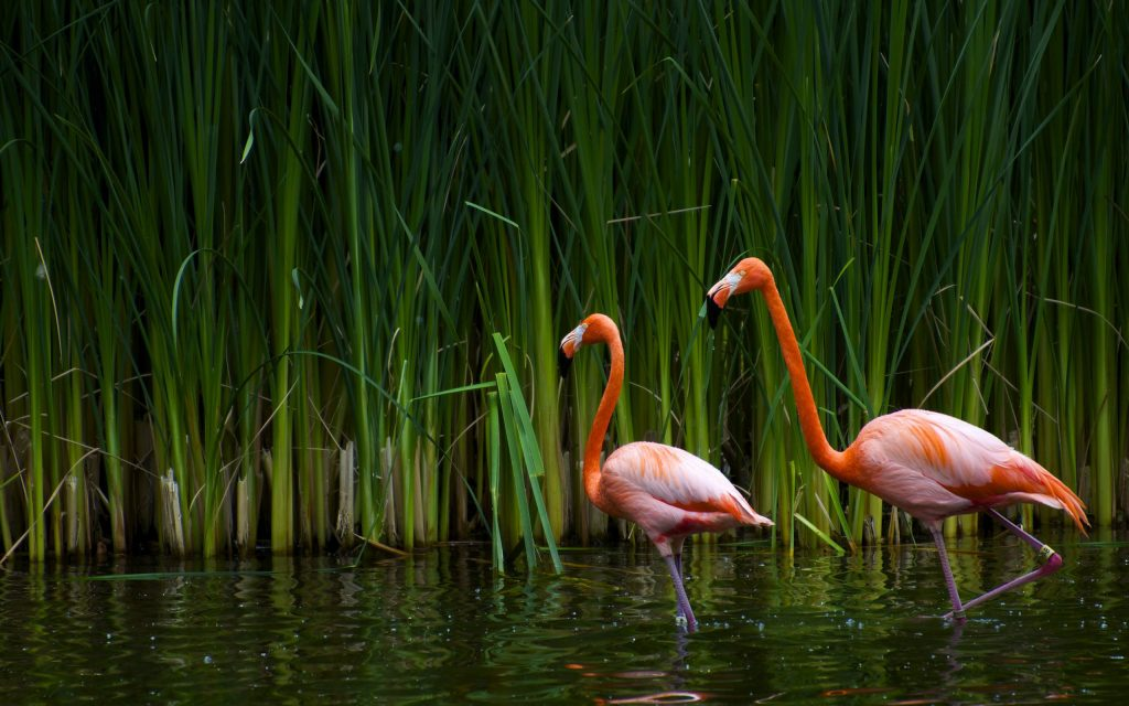 water-bird-flamingo-desktop-background-wallpaper-photos-download-full-free-colourful-amazing-pictur-PIC-MCH0115509-1024x640 Flamingo Wallpaper Hd 43+