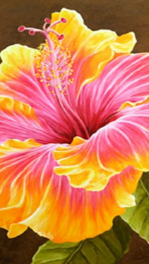 ws-Beautiful-Hibiscus-Flower-x-PIC-MCH0118687-577x1024 Hibiscus Wallpaper Iphone 19+