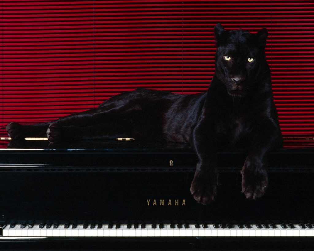 ws-Big-cat-on-piano-x-PIC-MCH0118695-1024x819 Big Cat Wallpapers For Desktop 28+
