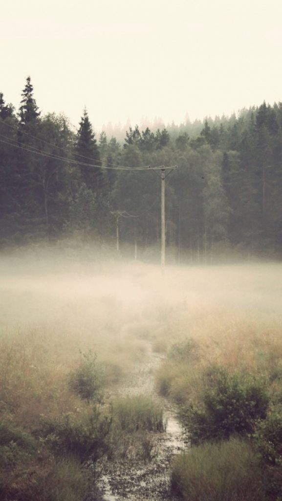 ws-Foggy-Forest-Mist-Creek-x-PIC-MCH0119002-577x1024 Fog Wallpaper For Iphone 5 37+