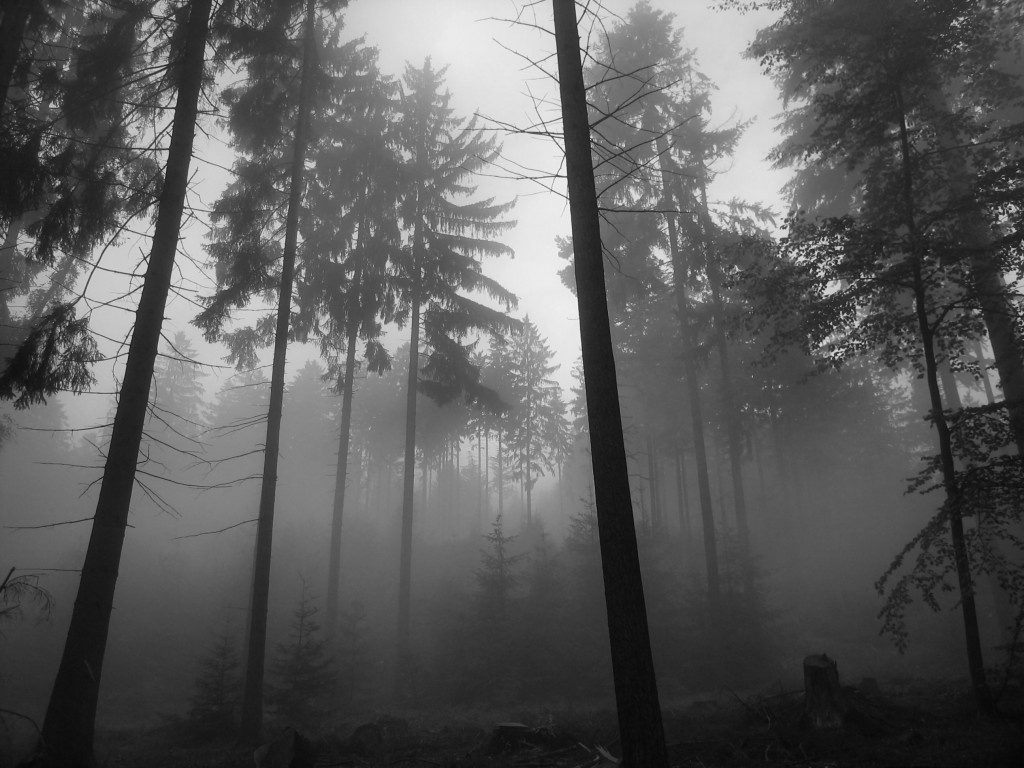 ws-Forest-Fog-x-PIC-MCH0119007-1024x768 Fog Wallpaper Desktop 34+
