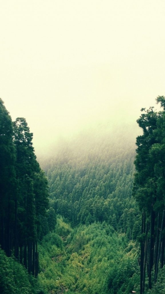 ws-High-Forest-x-PIC-MCH0119123-577x1024 Fog Wallpaper For Iphone 5 37+