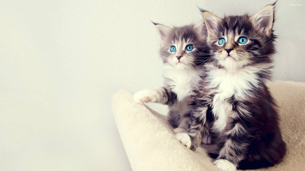 Beautiful-Cats-With-Blue-Eyes-HD-Wallpaper-PIC-MCH044744-1024x576 Beautiful Cat Wallpapers Hd 40+