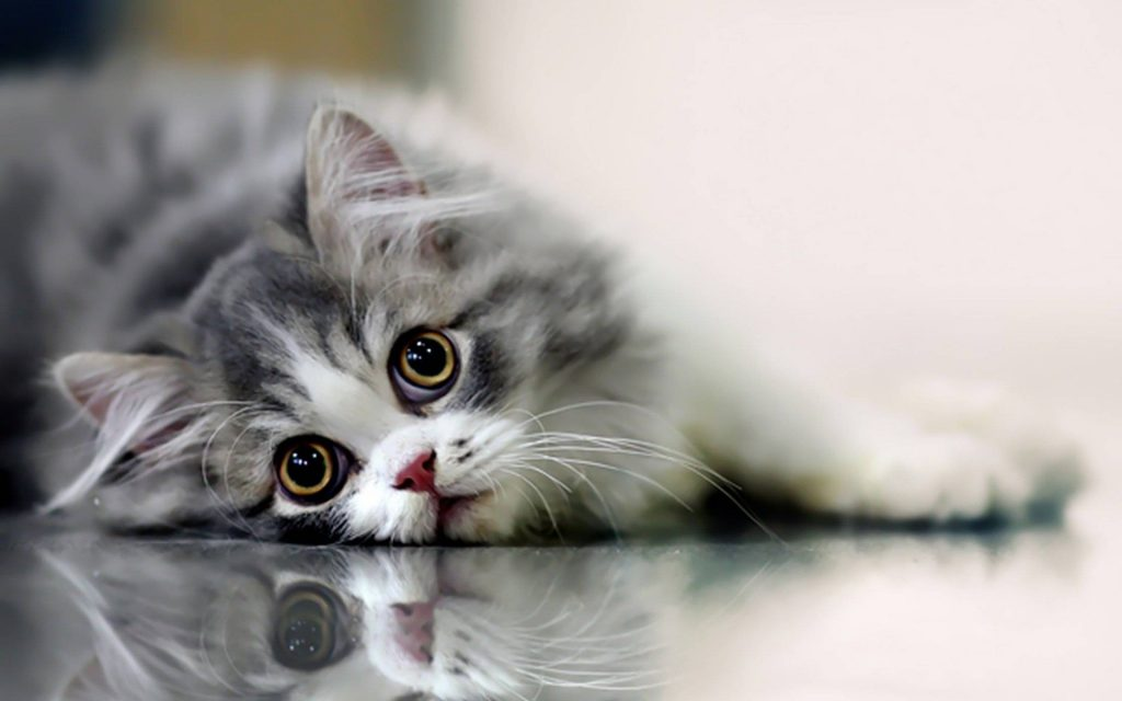 Beautiful-Cute-Cat-Wallpaper-PIC-MCH044780-1024x640 Beautiful Cat Wallpapers Hd 40+