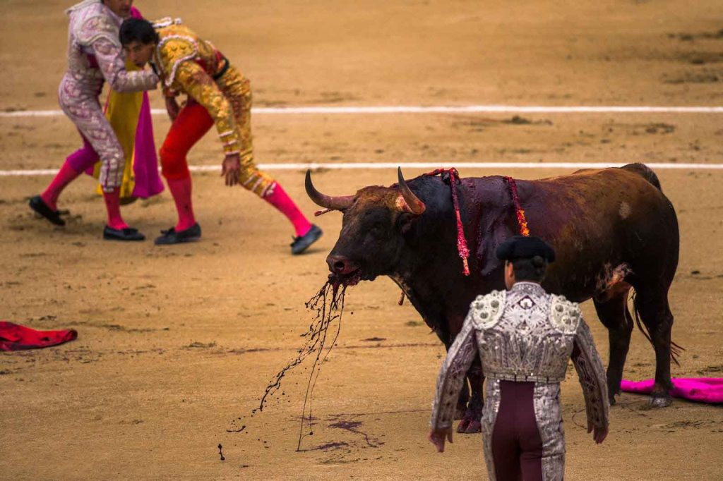 Bull-Fight-Latest-HD-Wallpapers-Free-Download-PIC-MCH050065-1024x682 Bull Wallpapers Free 49+