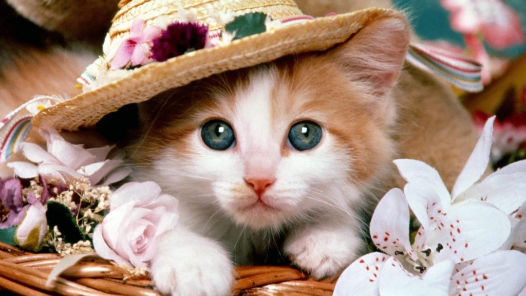 Cats-HD-Wallpapers-And-Images-Gallery-PIC-MCH051624-1024x576 Beautiful Cat Wallpapers Hd 40+