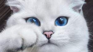 Most Beautiful Cat Wallpapers 26+
