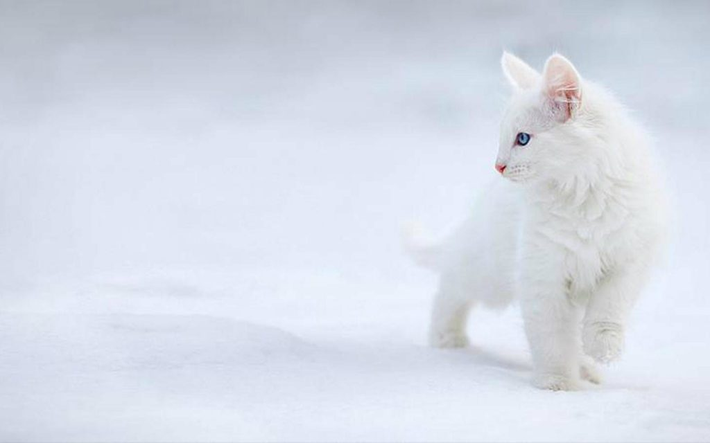Full-HD-p-Cute-Cat-Wallpaper-PIC-MCH066385-1024x640 Beautiful Cat Wallpapers Hd 40+