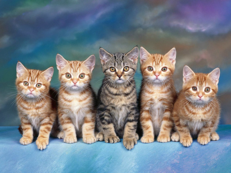 Most-Beautiful-Cats-HD-Wallpaper-x-PIC-MCH087427 Beautiful Cat Wallpapers Hd 40+