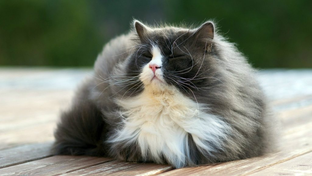 Most Beautiful Cat Wallpapers 26 Dzbc Org