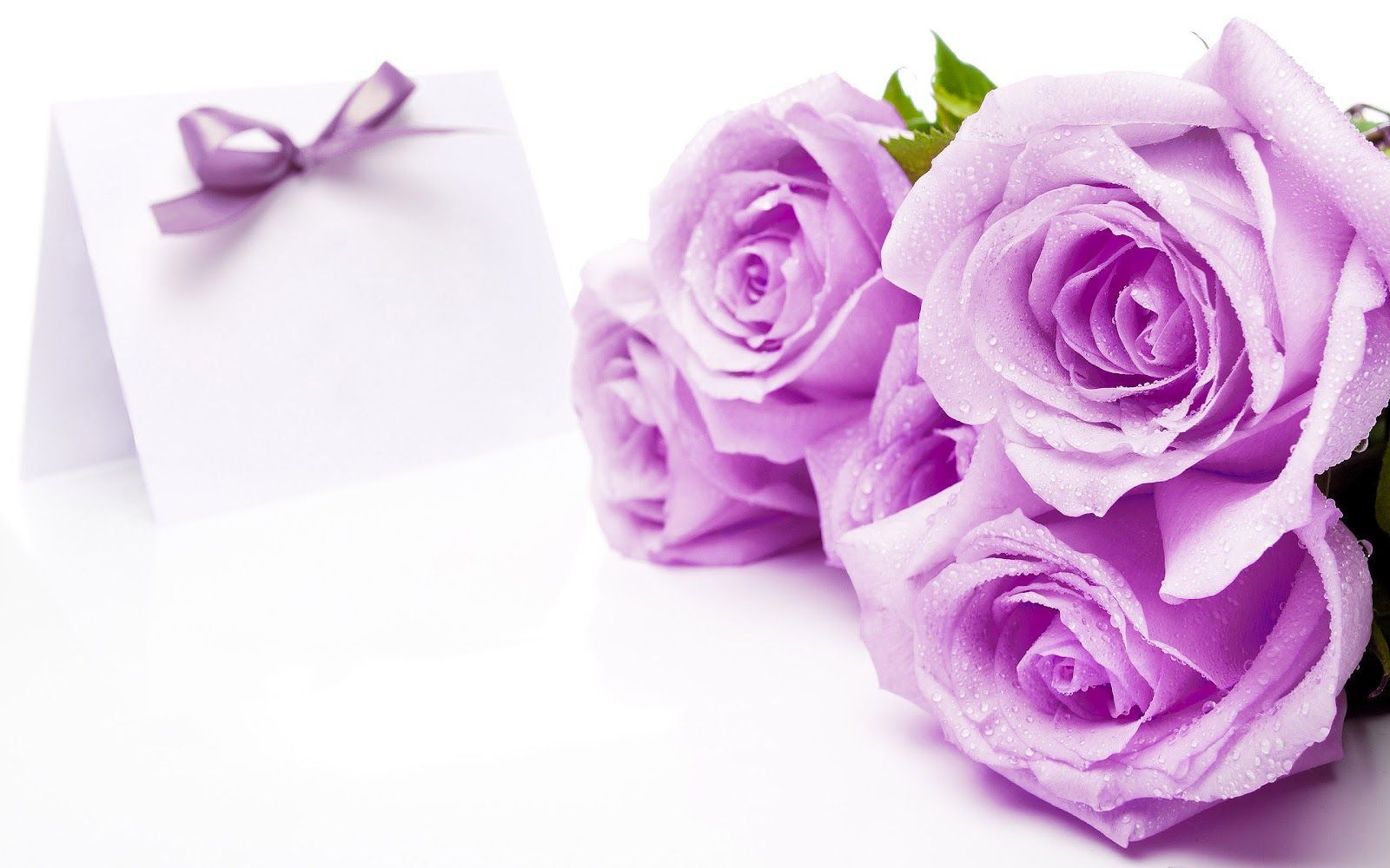 Purple And White Rose Wallpaper 38