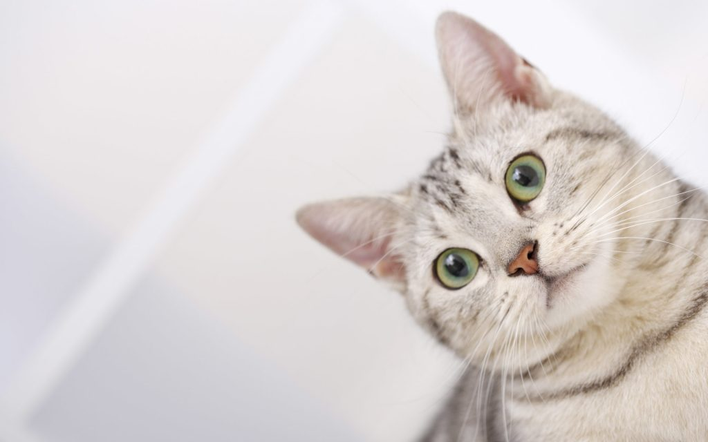 PIC-MCH021493-1024x640 Beautiful Cat Wallpapers Hd 40+