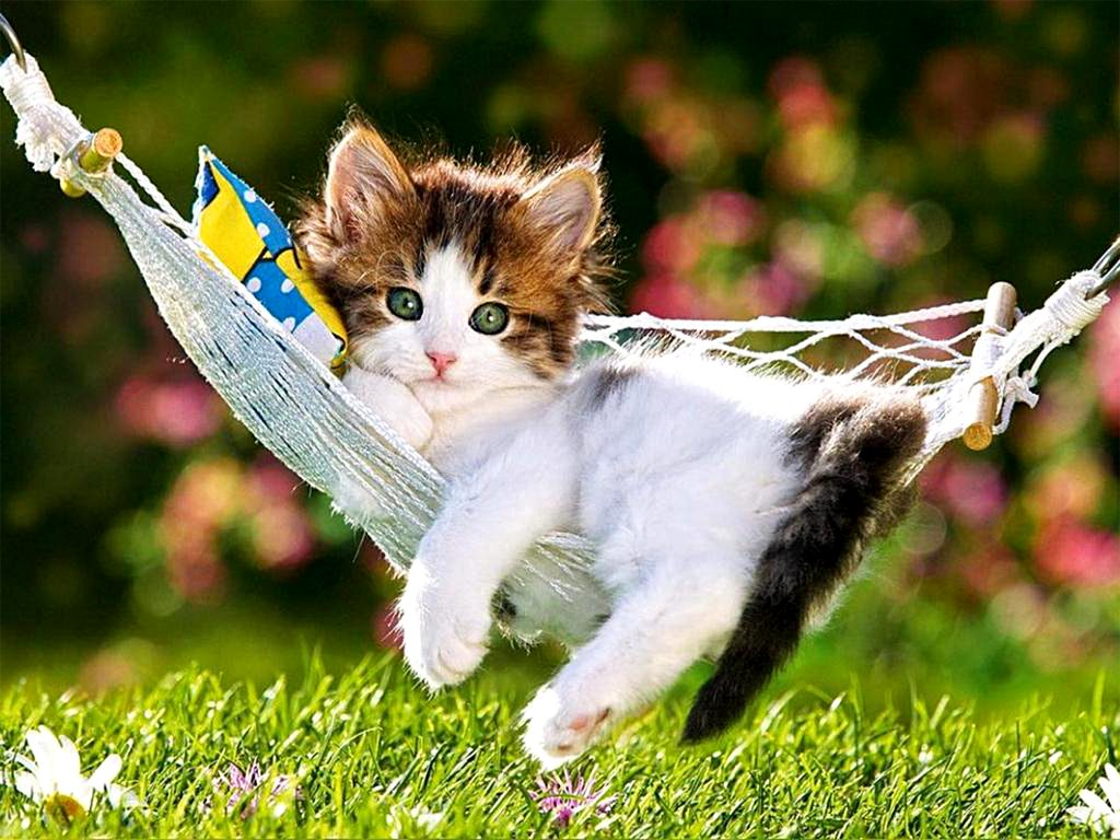PIC-MCH030961-1024x768 Beautiful Cat Wallpapers 28+