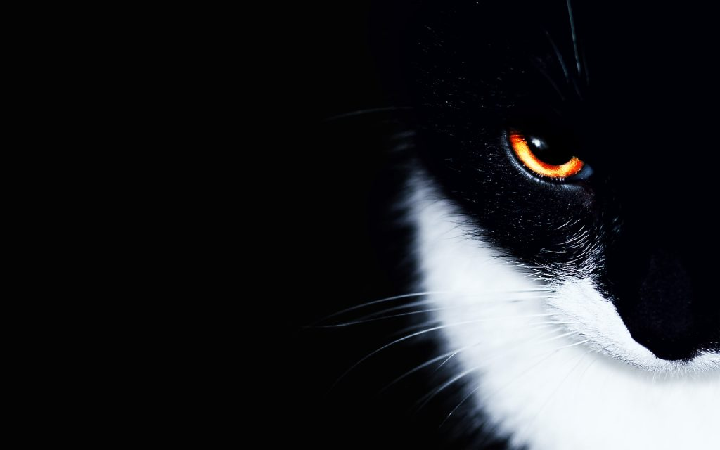 PIC-MCH08696-1024x640 Beautiful Cat Wallpapers Hd 40+