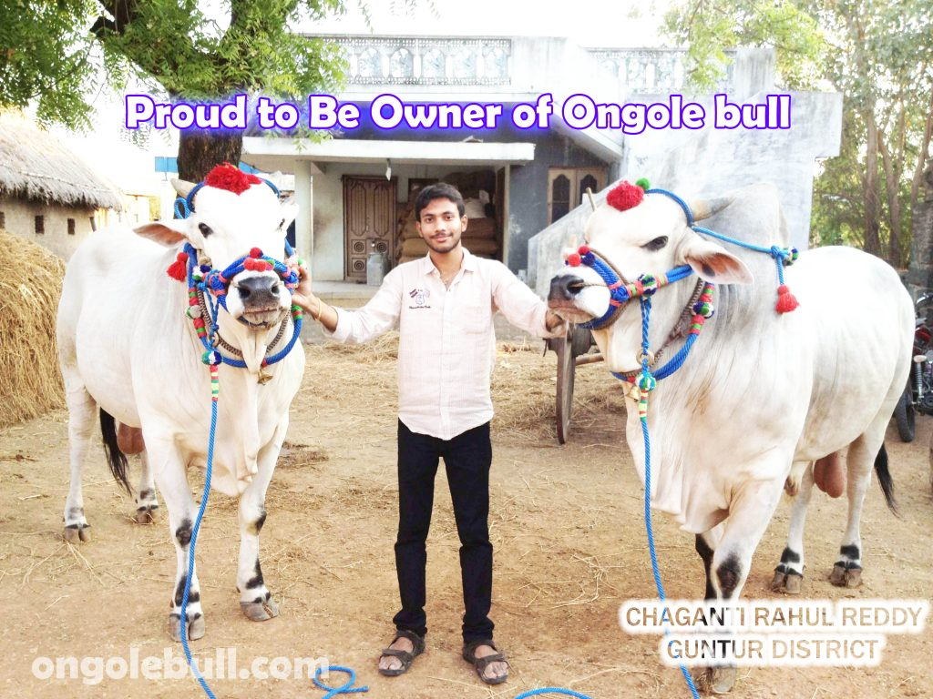 Proud-to-be-Owner-of-Ongole-Bull-PIC-MCH096292-1024x768 Ongole Bull Wallpapers 9+