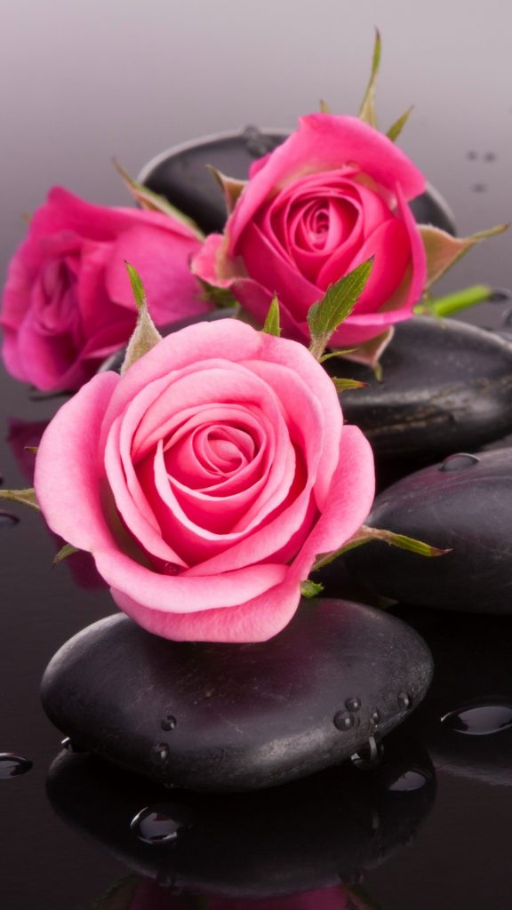 Red-Roses-on-Wet-Stones-Mobile-HD-Wallpaper-PIC-MCH098125-576x1024 Pink Hd Wallpaper For Mobile 35+
